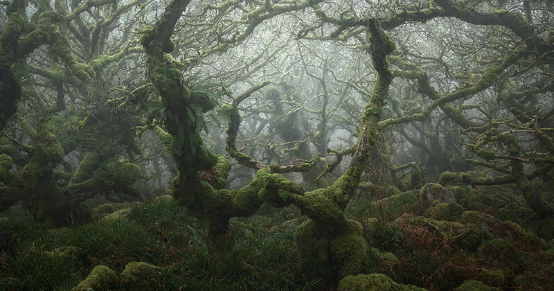 neil burnell wistmans wood photography 13 Nobody Captures the Mystical Wistmans Wood Like Neil Burnell