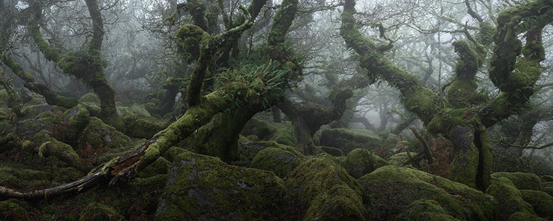 neil burnell wistmans wood photography 3 Nobody Captures the Mystical Wistmans Wood Like Neil Burnell