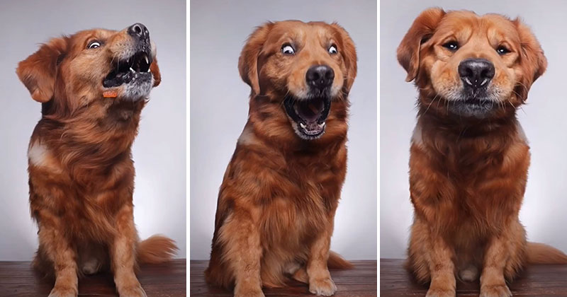 when you throw a dog a treat and capture it with burst mode 5 When You Throw Your Dog a Treat and Capture It with Burst Mode