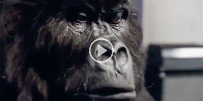 The Cadbury Gorilla Drummer is Still the Best AdEver