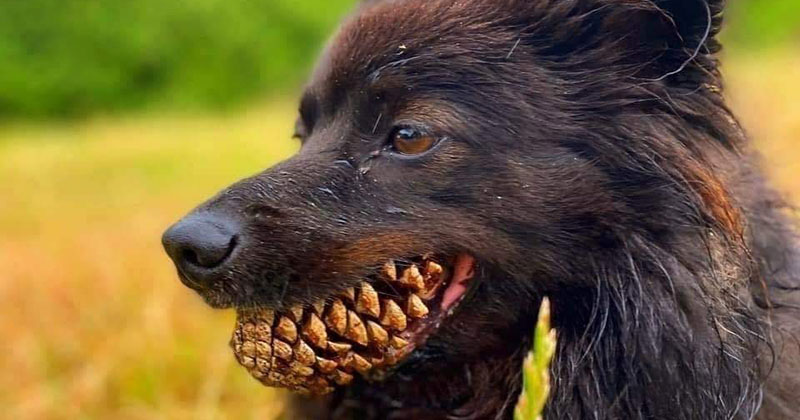 dog with pine cone in mouth The Shirk Report – Volume 584