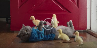 This Bizarre Short Film About a Runaway Duck Had Me Captivated the Entire 7 Mins