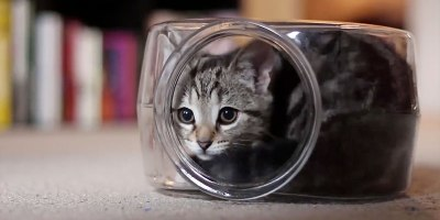 This Cat Playing Inside a Fish Bowl is Your Perfect 20 Second Distraction for theDay