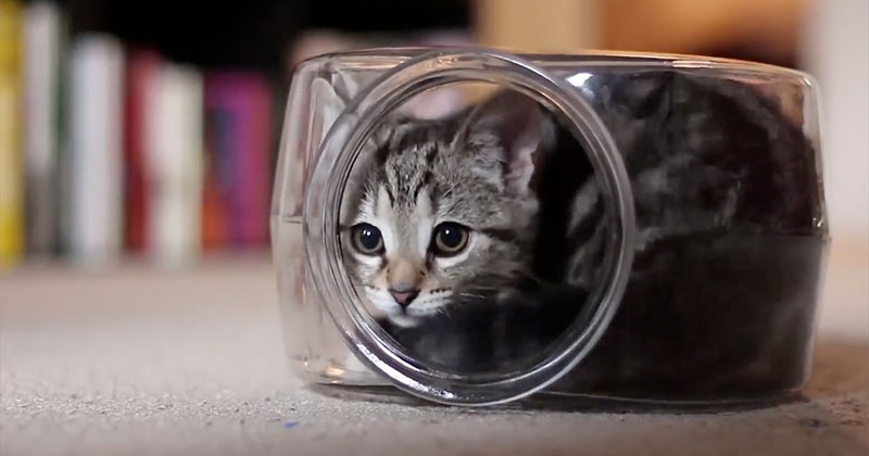 This Cat Playing Inside a Fish Bowl is Your Perfect 20 Second Distraction for the Day