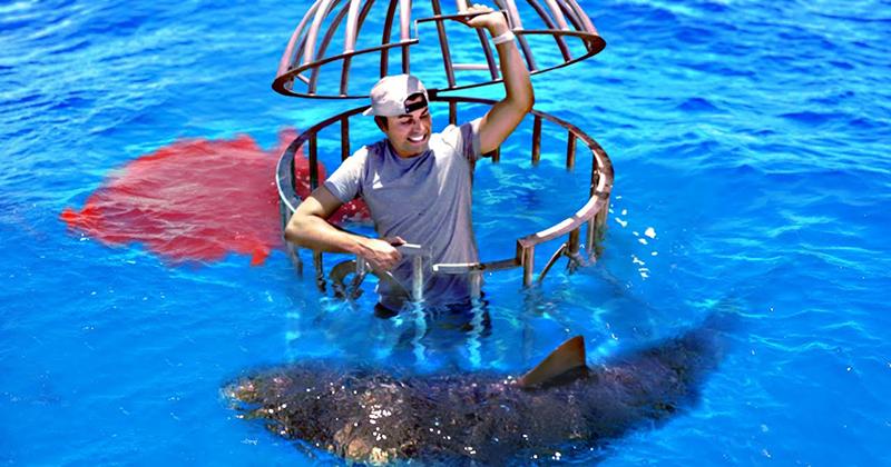 Shark Attack Test – Human Blood vs FishBlood