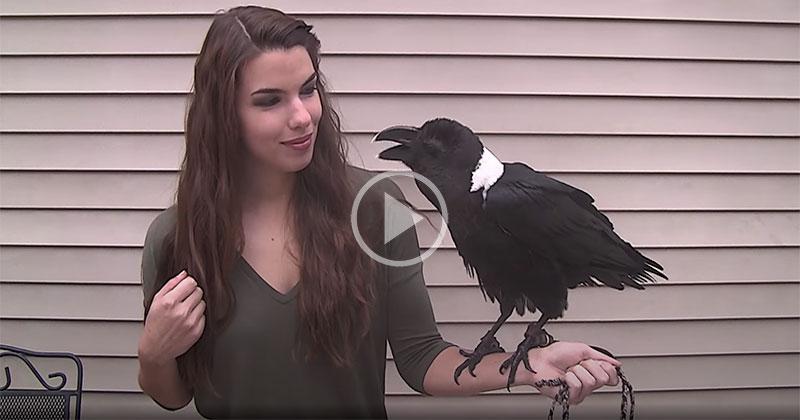 This Talking Raven isAmazing