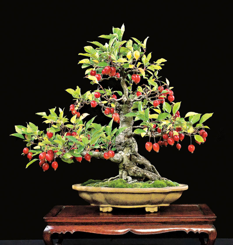 bonsai trees with fruit 8 Bonsai Fruit Trees are a Thing and Theyre Pretty Adorable (11 Photos)