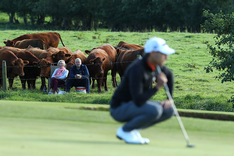 farmer cows irish open golf 1 The Only Spectators at the Irish Open were These Neighboring Farmers and Cows
