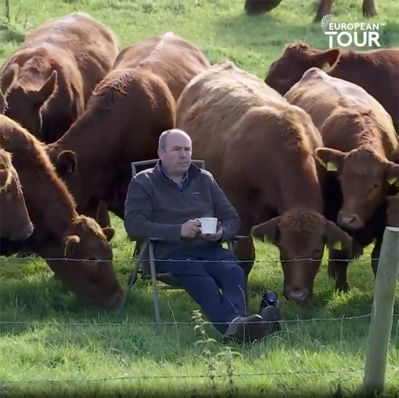 farmer cows irish open golf 4 The Only Spectators at the Irish Open were These Neighboring Farmers and Cows