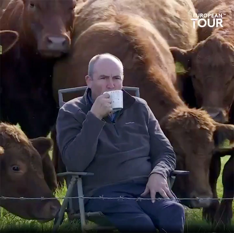 farmer cows irish open golf 5 The Only Spectators at the Irish Open were These Neighboring Farmers and Cows