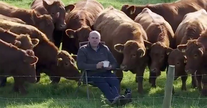 The Only Spectators at the Irish Open were These Neighboring Farmers and Cows