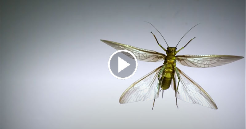 Using Super Slow Motion to See How Different Insects Achieve Flight