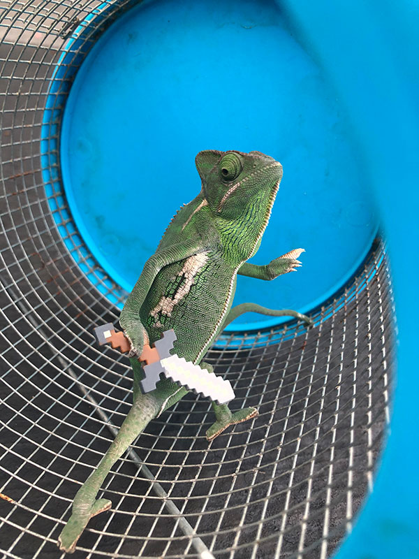 lizard holding lego props 4 Just a Lizard Holding a New Lego Prop Each Day