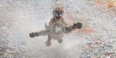 Man on Trail Run in Utah Stalked by Cougar for 6 TerrifyingMinutes