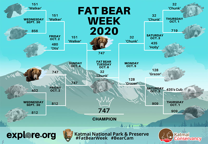 fat bear week 2020 champion 747 2 After 500,000 Votes, Bear 747 Crowned 2020 Champion of Fat Bear Week